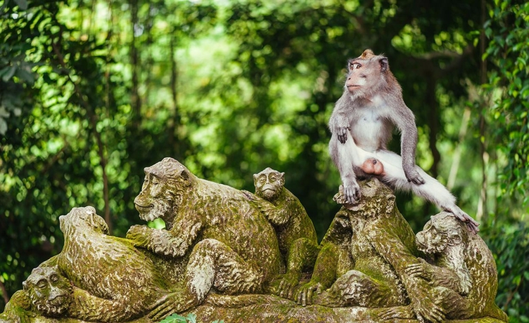 ubud-monkey-forest-bali.jpg
